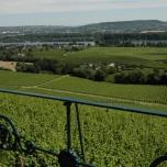 Weinberge im Rheingau (2016)