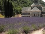 Kloster Sénanque in der Provence (2013)