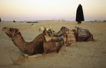 Morgendliche Wüste in Südtunesien (1998)