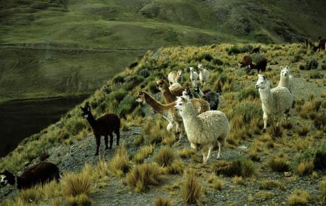 Anden zwischen La Paz und Paso La Cumbre (2005)