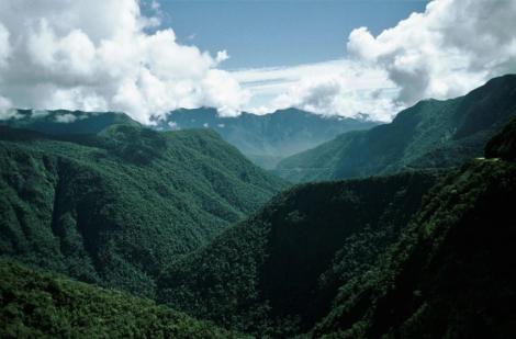 Yungas [Ostrand der Cordillera Real] bei Coroico (2005)