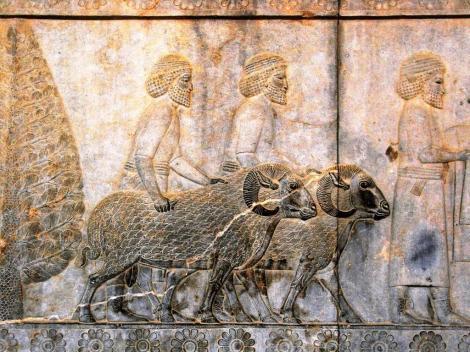 Persepolis: Apadana - Relief an der Osttreppe [Assyrer] (2007)