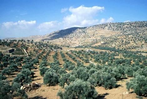 Landschaft bei Ajlun (2006)