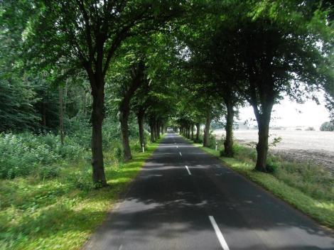 Allee zwischen Treptow und Kolberg (2007)