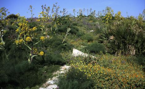 Segesta: Pflanzenwelt beim Theater (1999)