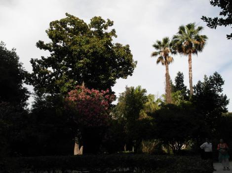 Syrakus: Pflanzenwelt bei den Latomien (2018)