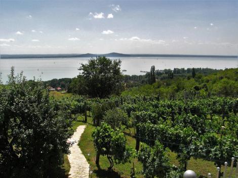 Blick vom Badacsony auf den See (2008)