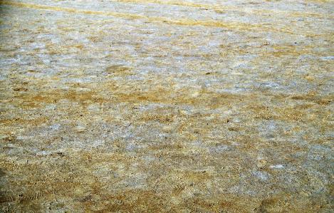 Schott El Djerid: Oberfläche aus Sand und Salz (1998)