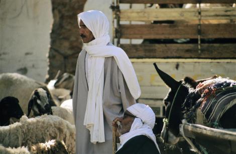 Douz: Kamelmarkt (1998)