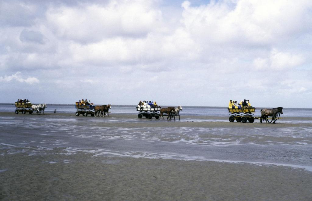 Cuxhaven-Duhnen: Wattwagen nach Neuwerk (1987)