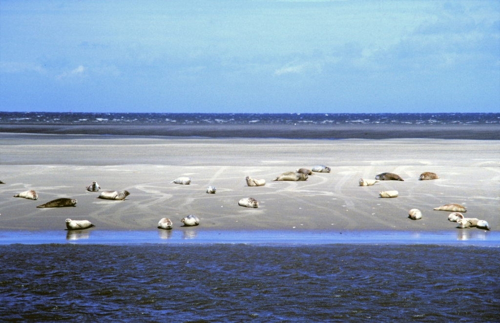 Seehundsbänke bei Cuxhaven (1987)